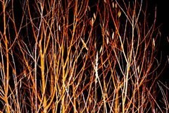 Branch night. Mysterious branches on a dark background Stock Photos