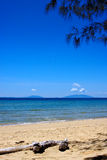 Branch in nosy be Royalty Free Stock Images