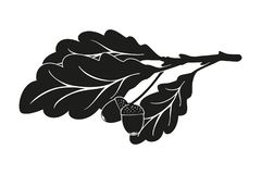 A branch of oak. Branch of oak with leaves and acorns isolated on white background royalty free illustration