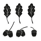 A branch of oak. Oak leaves and acorns isolated on a white background stock illustration