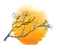 Branch of  oak tree against the sun Stock Photo