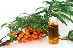 Branch Of Ripe Sea-buckthorn Berries Stock Photos