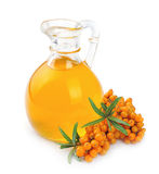 Branch Of Sea-buckthorn And Oil Stock Photography