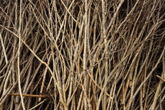 Branch. Old twigs as firewood pile of Royalty Free Stock Images