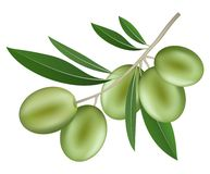 Branch of olive icon, realistic style stock illustration