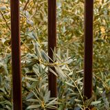 Branch of the olive tree view seen behind the fence - Image stock photo