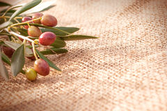 A branch of olives on sack cloth Royalty Free Stock Image