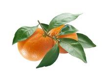 Branch of orange Stock Photos