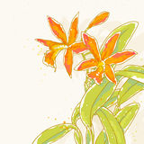 Branch of orange orchids on toned background Stock Image