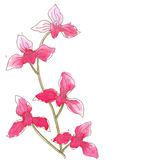 Branch with orchid flowers Stock Image