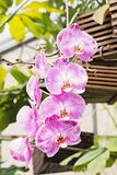 Branch Of Orchid Stock Photography