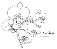 Branch of orchids. Branch of beautiful orchids on white background Stock Photo