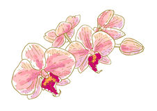 Branch of orchids. Isolated on white background Royalty Free Stock Photos