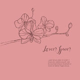 The branch of orchids flower. The hand drawn ink sketch. Vector Royalty Free Stock Images