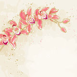 Branch of orchids on toned background Stock Photography