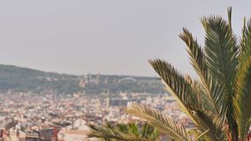 A branch of a palm tree against the background of the City of Barcelona. A branch of a palm tree against the background of the City of Barcelona stock video footage