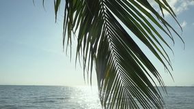 Branch of a palm tree against the background of the sea and the luminous sun. slow motion. 1920x1080. Hd stock video