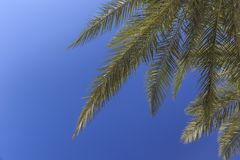 A branch of a palm tree against the blue sky royalty free stock photo