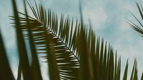 Branch of a palm tree on a background of a cloudy sky, 4K. The sun`s rays make their way through the branches of palm trees. Sky, clouds, breeze stock video footage