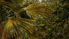 Branch of a palm tree on a blurred background stock video footage