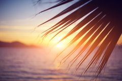 Branch of a palm tree Royalty Free Stock Images