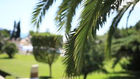 A branch of a palm tree close-up stock video footage