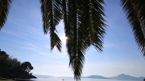 A branch of a palm tree close-up stock footage