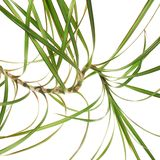 Branch of a palm tree fragment Royalty Free Stock Photos