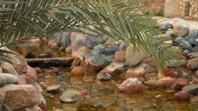 The branch of palm trees on a background of a rivulet. Rivulet inlaid stones stock video footage