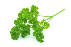 Branch of parsley Royalty Free Stock Photography