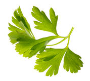 A branch of parsley Royalty Free Stock Photography