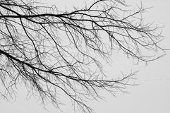 Branch pattern. The branches of a tree. Winter royalty free stock photography