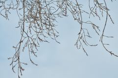 Branch pattern. The pattern of tree branches stock photos