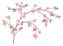 Branch of peach with blooming flowers - vector Royalty Free Stock Photo