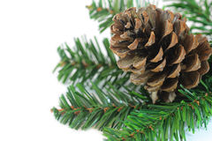 Branch with pine cone. On white background royalty free stock photos
