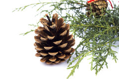 Branch and pine cones Royalty Free Stock Photography