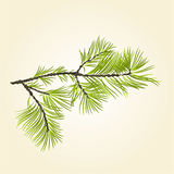 Branch Pine conifer vector Stock Photography
