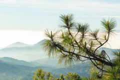 Branch of pine and mountain among the mist and sun light. Royalty Free Stock Photography