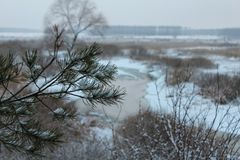 branch of pine,river, winter, white snow, horizon stock photo