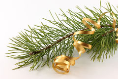 Branch of a pine and serpentine Royalty Free Stock Image