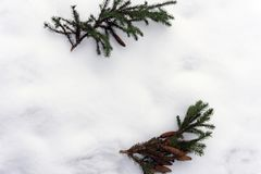 Branch of pine in the snow with copy space.  Stock Photo