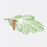 Branch pine  with snow and pine cone christmas theme vector Stock Image