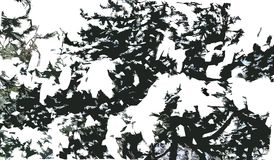 A branch of pine in the snow. royalty free stock photography