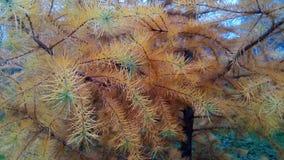 Branch stock photos