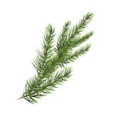 Branch of pine tree. Spruce, pine, fir. Christmas tree. Branch of pine tree. Spruce, pine, fir. Vector illustration. Christmas tree Royalty Free Stock Image
