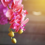Branch of  pink artificial orchid Royalty Free Stock Photography