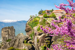 Branch of pink blossom and Great Meteoro Monastery in Meteora on the background Stock Image