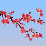 Branch of pink blossoming sakura. Japanese cherry tree. Royalty Free Stock Photo