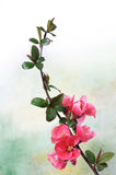 Branch of pink flowers Royalty Free Stock Photography