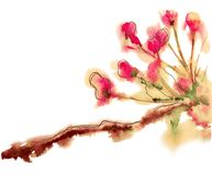Branch with pink flowers. Drawing is painted in watercolor. stock image